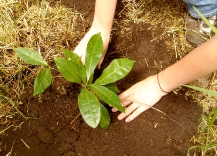 Bäume pflanzen in Costa Rica (Bild: UGA)