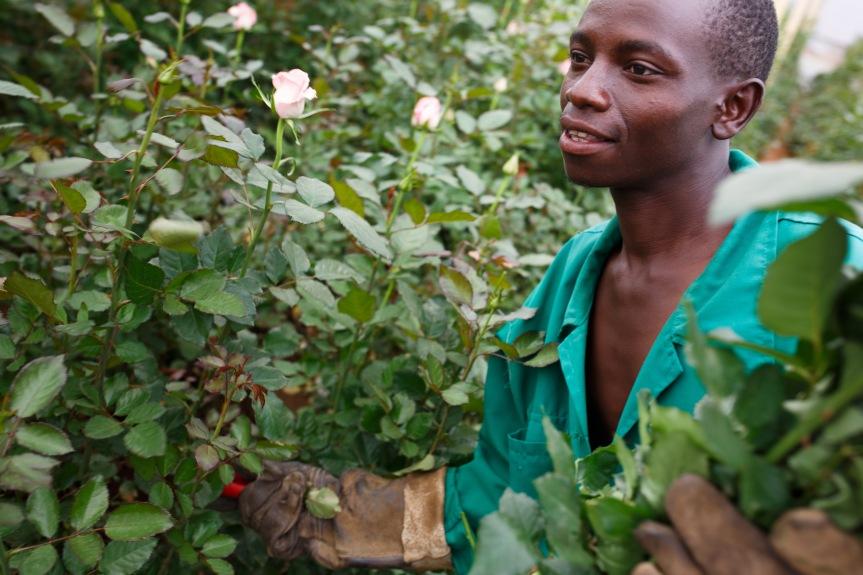 Joshua Kilei, Blumenarbeiter in Kenia (Copyrights: Nathalie Bertrams)