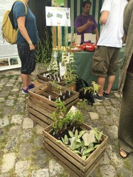 Pflanzen bestaunen und kaufen