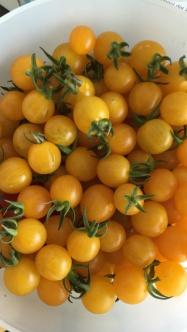 Gelbe Cherry-Tomaten