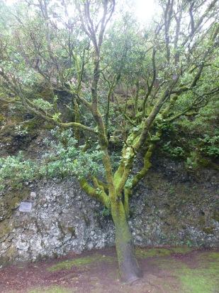 Der heilige Baum