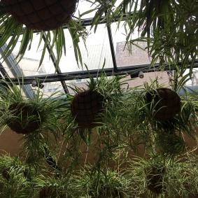 El huerto de lucas