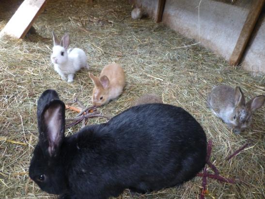 Die jungen Kaninchen