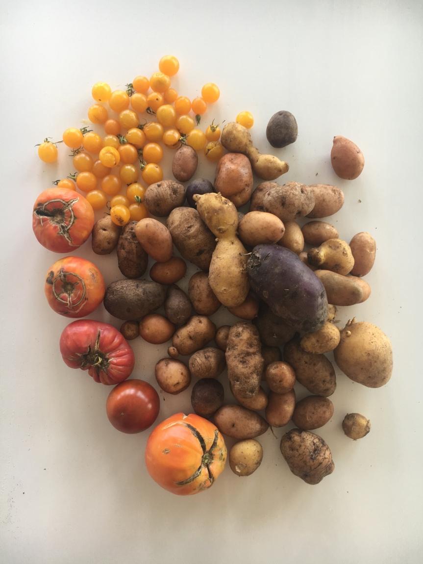 Kartoffeln, Tomaten