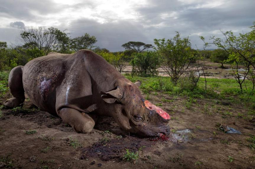 Wildlife Photographer of the Year – inBasel