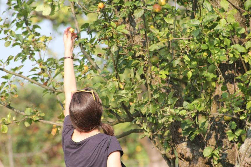 Griff zum Apfel